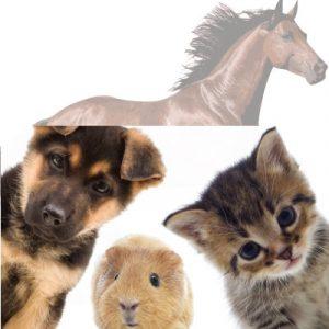 Hampa för djur