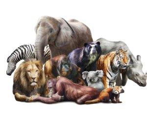 Övriga djur