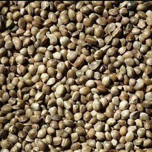 Produkter från hampans frön